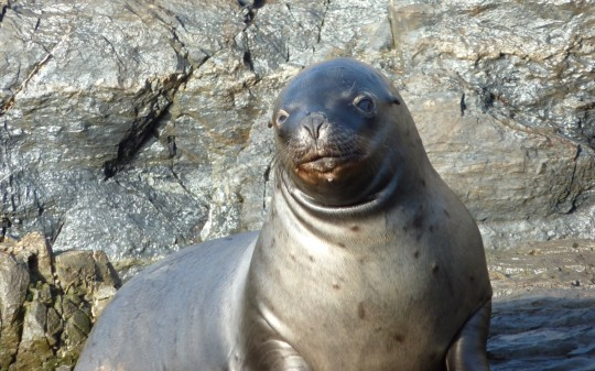 Sea Lion posing for my camera